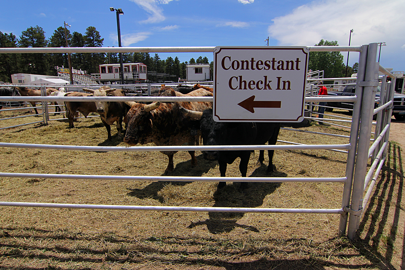 check-in-elizabeth-stampede-rodeo