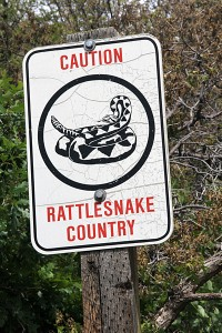 rattle-snake-warning