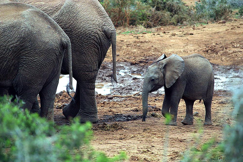 baby-elefant-addo-elephant-national-park