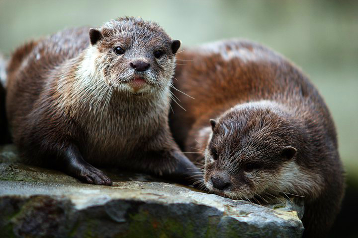 otter-zoo-berlin