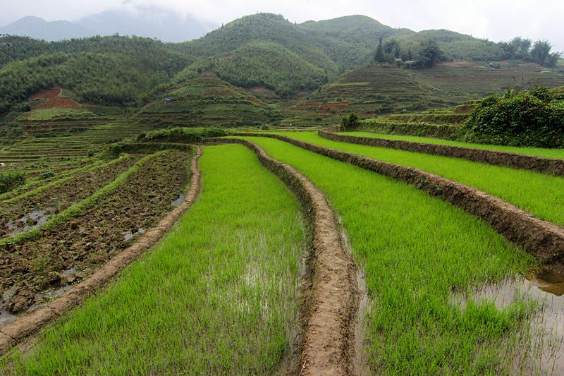 sapa-vietnam-reisfelder