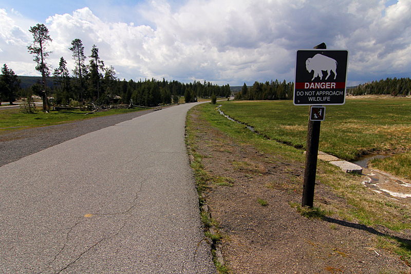 beware-of-buffalo-yellowstone-nationalpark