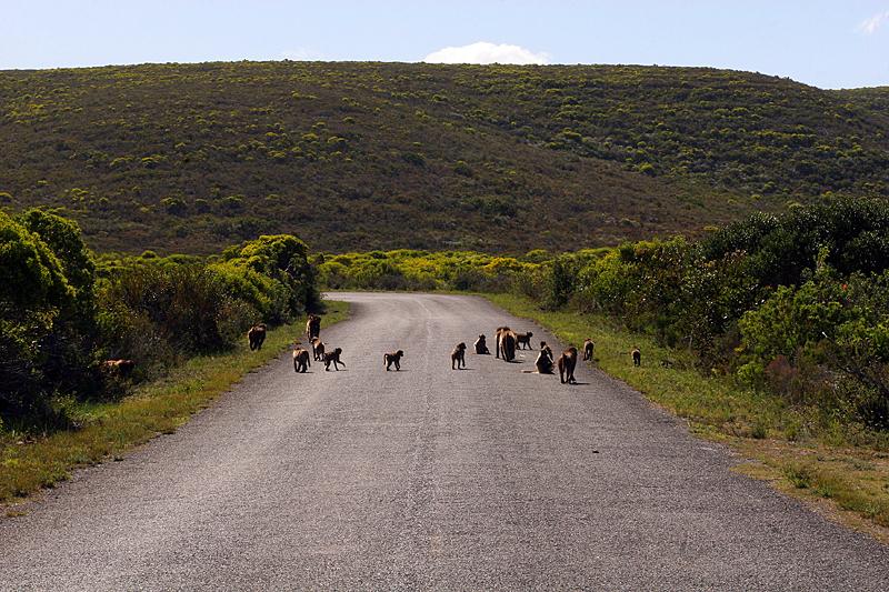 de-hoop-nature-reserve-suedafrika