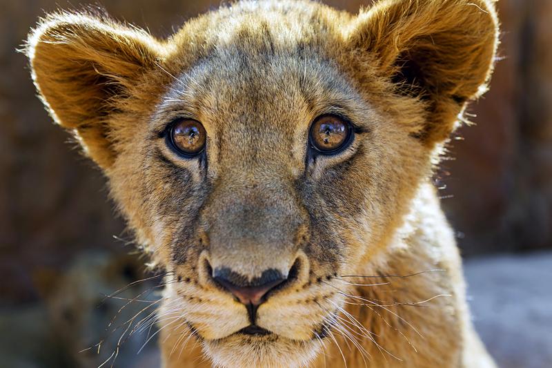 Quelle: Flickr/Tambako the Jaguar