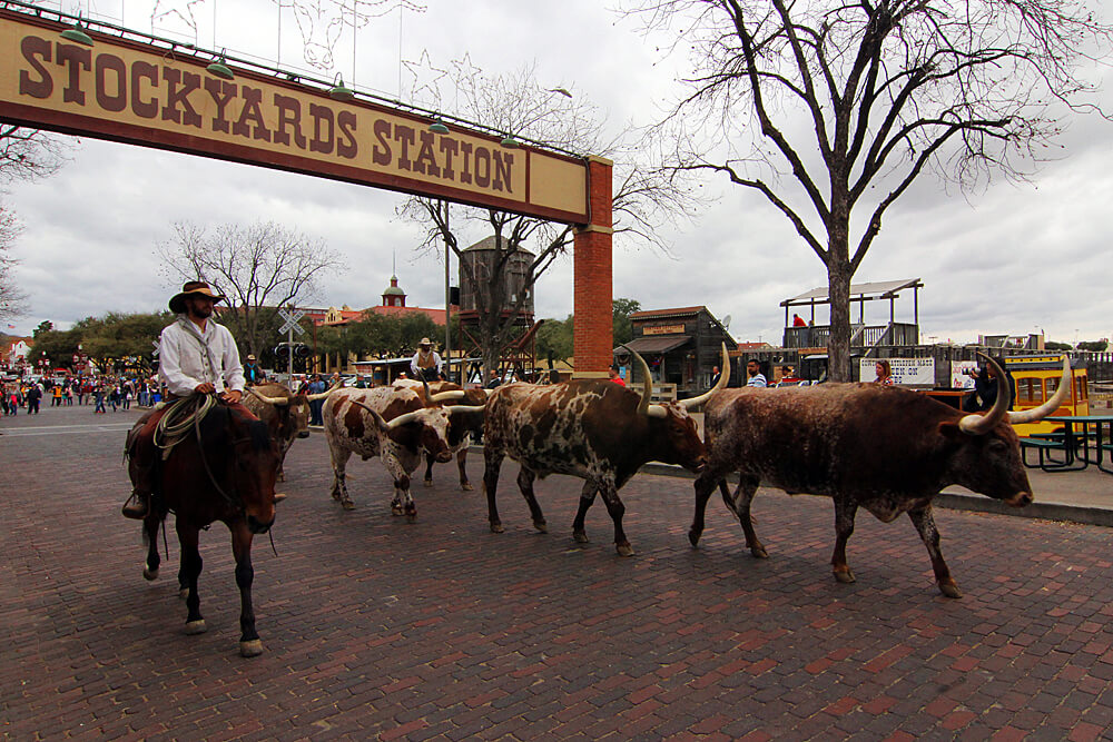 fort-worth-stockyards-cattle-drive
