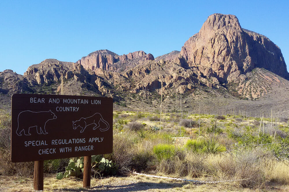 bear-and-mountain-lion-country-big-bend-national-park-texas (1)