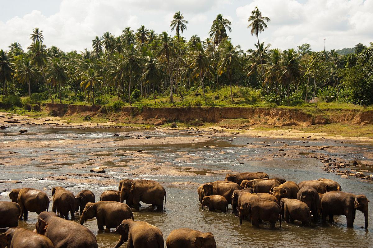 Sri Lanka Reisezeit