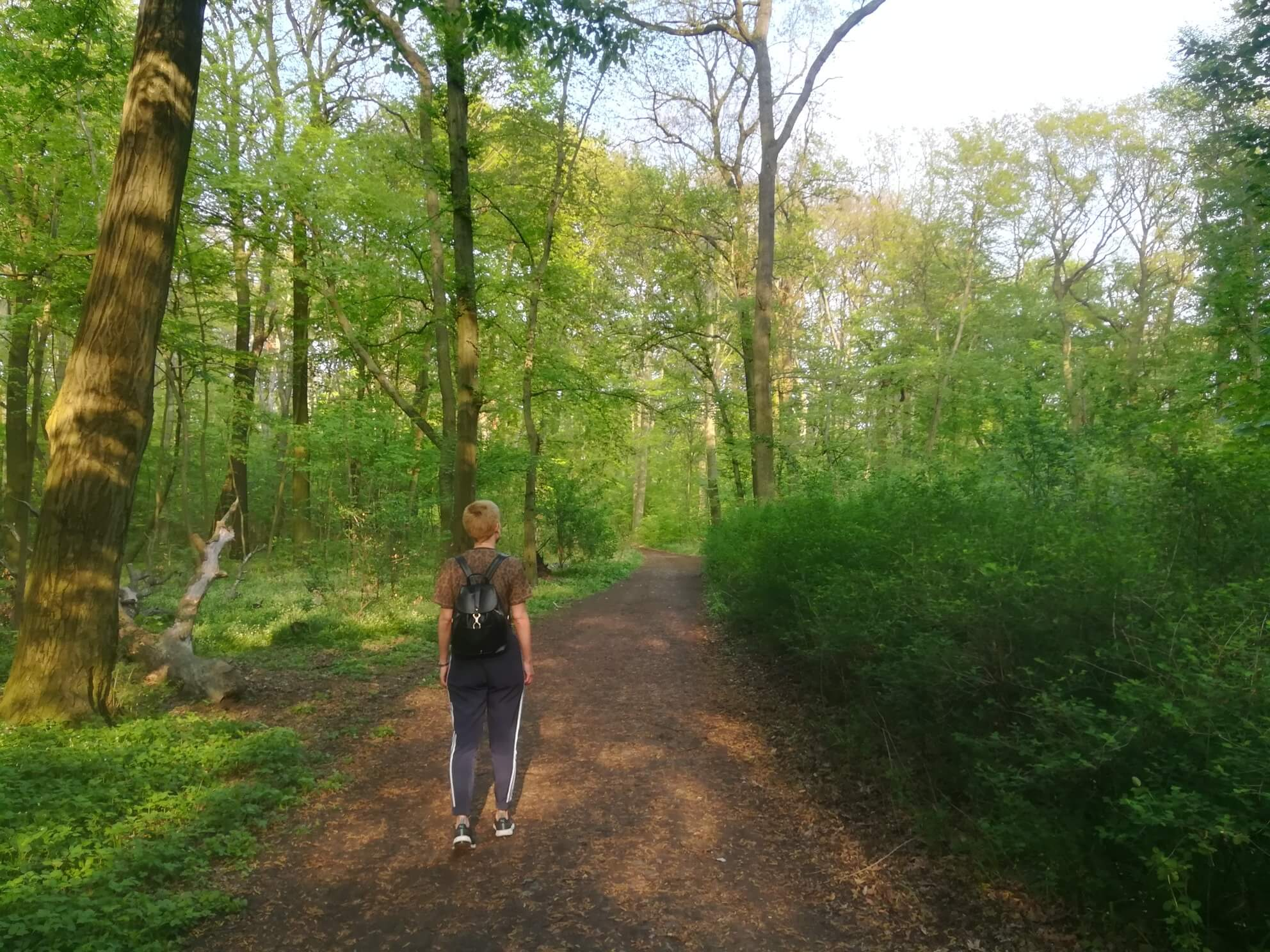 sommer berlin wandern plänterwald