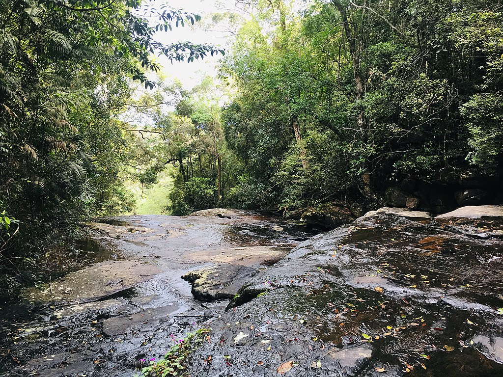 Sri Lankas Natur: Sinharaja Rain Forest